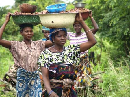 La recogida del karité en África. Foto Irene H-Sanjuan-Manos Unidas